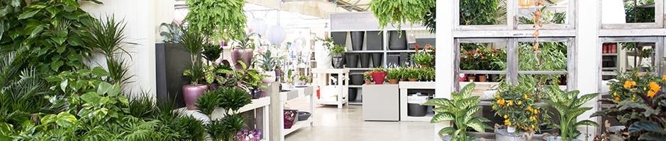 Auxiliar de jardineria i centres de jardineria for Auxiliar jardineria